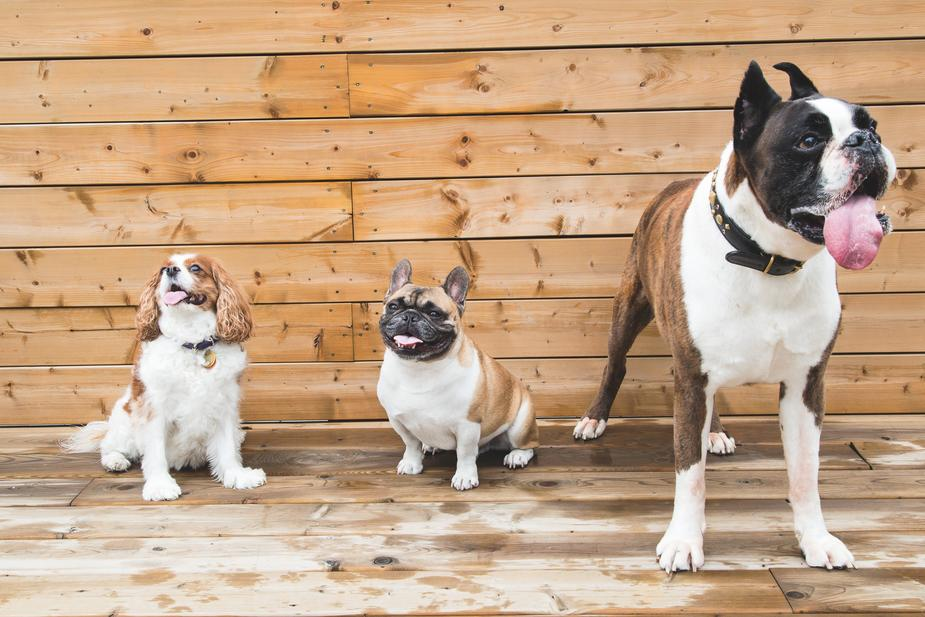 Best CBD Oils For Pets in 2020   Reviews & Buying Guide